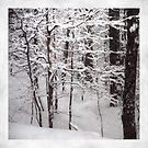 Wood Deep by Mary Ann Reilly