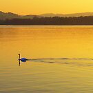 On Golden Pond by Andrew  Bailey