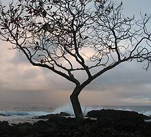 Kaumane Tree at Dawn by ronholiday