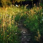 Country path-Tamnyrankin Northern Ireland by Andrew Gilmore
