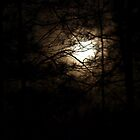Moon Branches by Rob Dodd