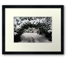 Hedge Tunnel Framed Print