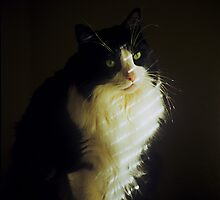 Staring at the Light by Doug Greenwald