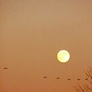 Moon and Birds by Mary Kaderabek-Aleckson