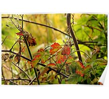 Red Green Leaves Poster