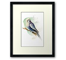 Blue Watercolour Budgie Framed Print