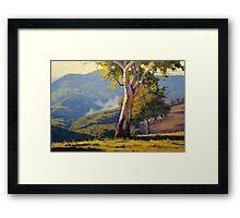 Sleeping Koala Turon Framed Print