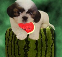 SUMMER TIME SHIH TZU PUPPY ENJOYING THE TASTE OF WATERMELON,JOURNAL--PICTURE,PILLOW,TOTE BAG,ECT.. by ✿✿ Bonita ✿✿ ђєℓℓσ