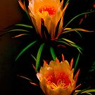 Night Cereus by HG. QualityPhotography
