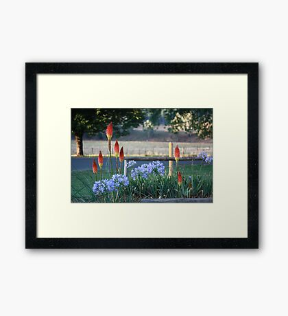 Pokers & Panthus, Bright Framed Print
