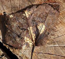 Beauty Of A Leaf by Joy Watson