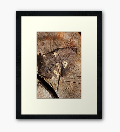 Beauty Of A Leaf Framed Print