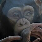 Baby Chimp by Alison Caltrider