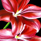 """""""Lilies on black"""" Floral series 2010 by Taniakay"""