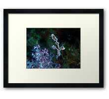 Ornate Ghost Pipefish Framed Print
