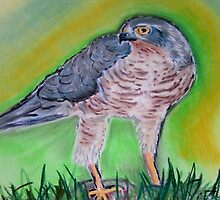 l' Epervier Kestrel drawing by patjila
