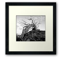 Dead outback tree Framed Print