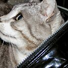 Let the cat out of the bag not an easy task by patjila