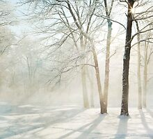 Sunbeams on snow by bettywiley