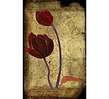 2 tulips Photographic Print