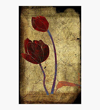 2 tulips Photographic Print