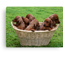 Basket Full Of Mischief Canvas Print