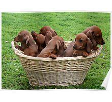 Basket Full Of Mischief Poster