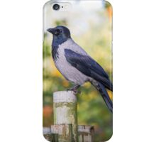 Hooded Crow iPhone Case/Skin