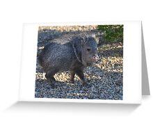Backyard Intruder Greeting Card