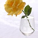 yellow rose in glas by OldaSimek
