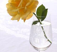 yellow rose in glas by OldaSimek