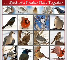 Birds of a Feather. . . . by Trudy Wilkerson