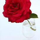 red rose in glas by OldaSimek