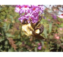 One Busy Bee Photographic Print