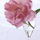 pink rose in glas by OldaSimek