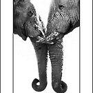 Hello Old Friend - Etosha NP Namibia Africa by Beth  Wode