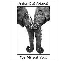 Hello Old Friend - Etosha NP Namibia Africa Photographic Print