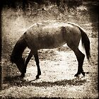 Horse Silhouette by Carlos Restrepo