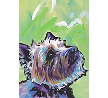Cairn Terrier Dog Bright colorful pop dog art Photographic Print
