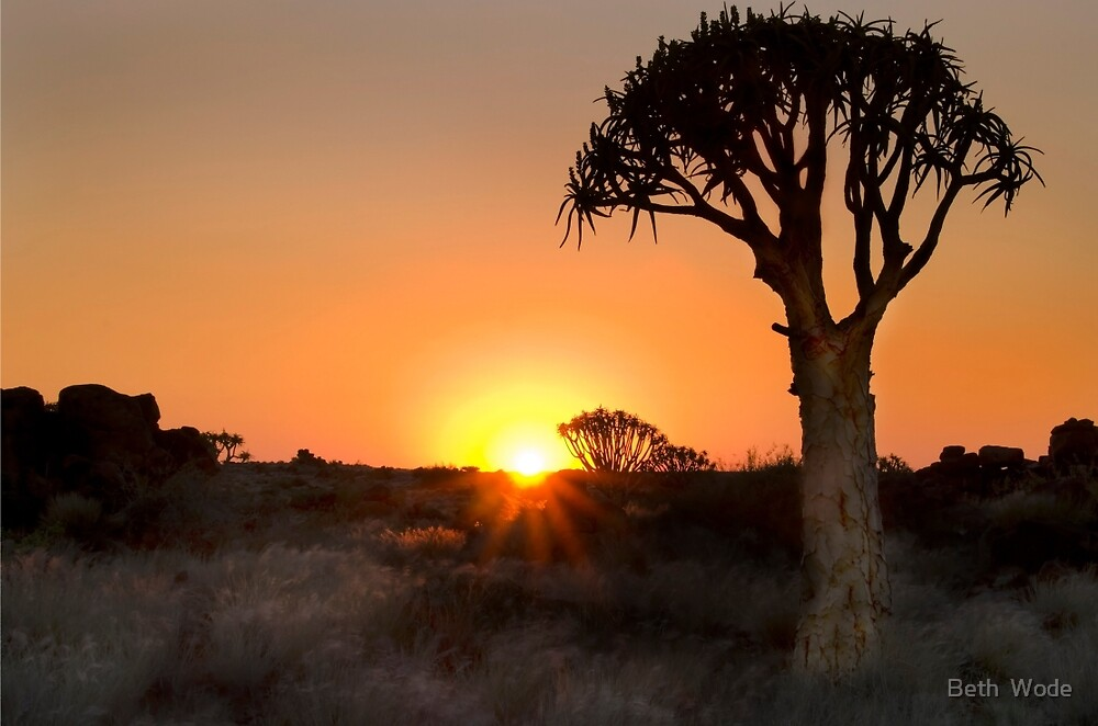 Quiver Tree Dawning - Namibia Africa by Beth  Wode