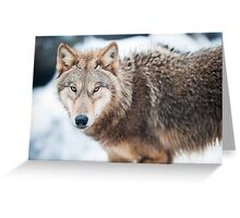 wolf (lat. Canis lupus) Greeting Card