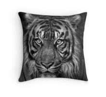 Here Kitty, Kitty, Kitty Throw Pillow