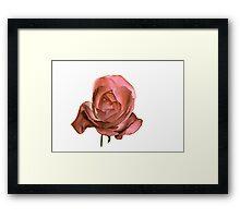 Una Rosa Con Acqua Framed Print
