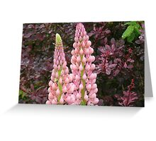happy marriage of berberis and lupin Greeting Card