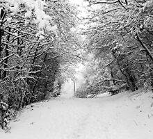 Snow Path by Stephen Robinson
