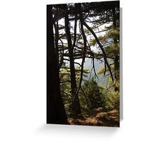 trees in the Gorge of Samaria Crete Greeting Card