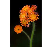 Orange Bouquet Photographic Print