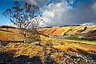 Watendlath View - Cumbria by David Lewins