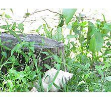 Fence. Photographic Print