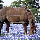 Grazing in the Bluebonnet Field by Susan Russell